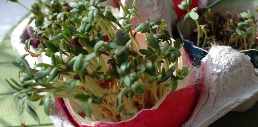 Green eggs no ham great indoor gardening for kids fun with kids green eggs no ham great indoor gardening for kids workwithnaturefo