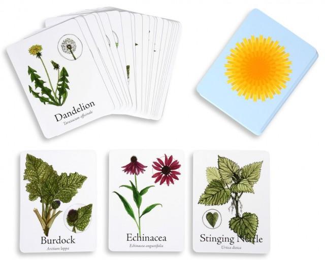 Medicinal-Plants-Board-Game-6