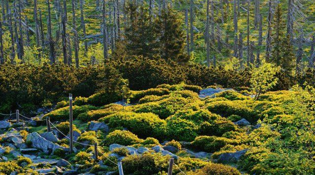 nationalpark-bayerischer-wald